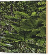 Swan Creek Foliage Wood Print