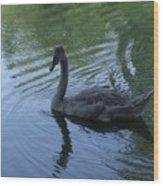 Swan Cygnet Wood Print