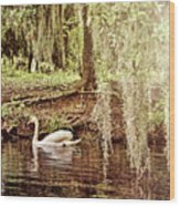 Swan Dreams Wood Print