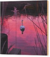 Swan In A Sunset Wood Print