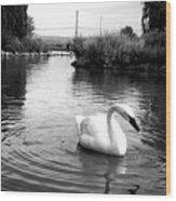 Swan In Black And White Wood Print