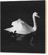 Swan In Blackwater Wood Print