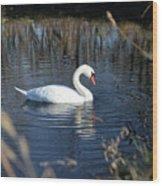 Swan In Blue Pond Wood Print