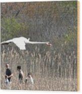 Swan In Flight Wood Print