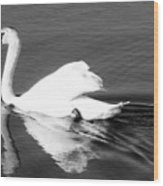 Swan In Motion On A Pond Wood Print