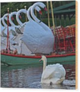 Swan Meeting Up With Some Friends Wood Print