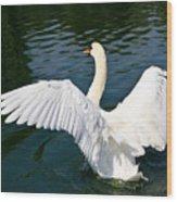 Swan Moment Wood Print