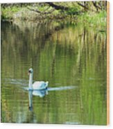Swan On The Cong River Cong Ireland Wood Print