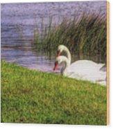 Swan Pair Warm Color Wood Print