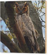 Swan Point Great Horned Owl Wood Print