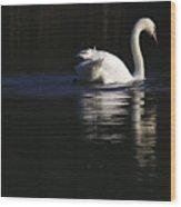 Swan Reflected Wood Print
