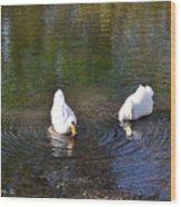 Swan Ripplle  Wood Print