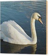 Swan Strutting Wood Print