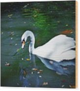 Swan With Twig Wood Print