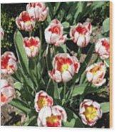 Swanhurst Tulips Wood Print