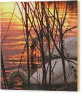 Swans 1 Wood Print