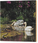 Swans And Signets Wood Print