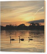 Swans At Dawn Wood Print