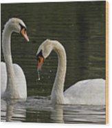 Swans Courtship Wood Print