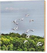 Swans In Flight Wood Print