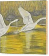 Swans In The Fall In Montana Wood Print