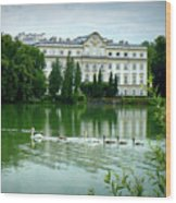 Swans On Austrian Lake Wood Print