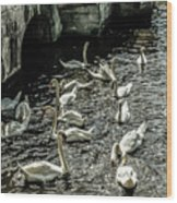 Swans On The Canal Wood Print