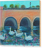 Swans On The Charles River Wood Print