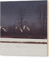 Swans Over The Marsh Wood Print
