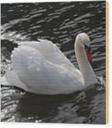 Swans Reflection Wood Print