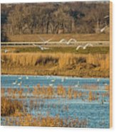Swans Returning To The Roost At Riverlands 7r2_dsc3855_12202017 Wood Print