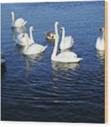 Swans Sligo Ireland Wood Print