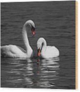 Swans Swimming Isolation Wood Print