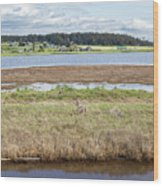Swantown Lake Estuary Wood Print