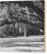 Swaying Oak  Wood Print