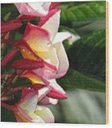 Sweet Aroma Wood Print