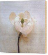 Sweet Bay Magnolia Bloom Wood Print