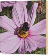 Sweet Bee On Pink Cosmos - Digital Art Wood Print