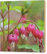Sweet Bleeding Heart Wood Print