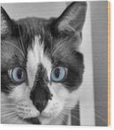 Sweet Blue Eyes Wood Print