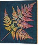 Sweet Cicely Wood Print