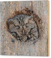 Sweet Dreams Screech Wood Print