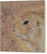 Sweet Face Of A Prairie Dog Up Close And Personal Wood Print
