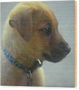 Sweet Faced Cunucu Puppy In Aruba Wood Print