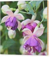 Sweet Fuchsia Flowers Wood Print