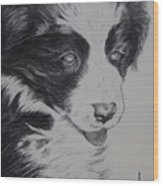 Sweet Girl Border Collie Puppy Wood Print