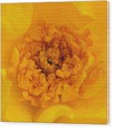 Sweet Heart Of Yellow Rose Wood Print