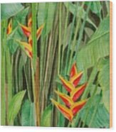 Sweet Heliconias Wood Print