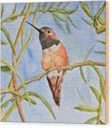 Sweet Hummingbird Wood Print