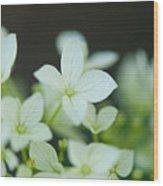Sweet Hydrangea Wood Print